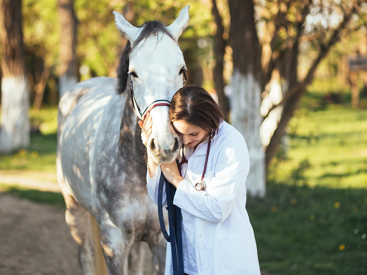 Journée de pathologie comparée (pour médecins et vétérinaires)