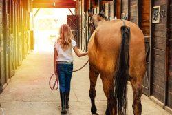 Sortie cheval en longe