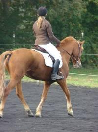 DERE - cheval guéri