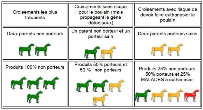 tableau synoptique des combinaisons générales possibles des gènes