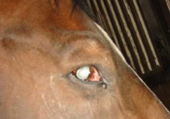paupière cheval tetanos