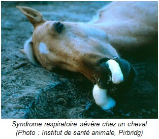syndrome respiratoire sévère cheval - RESPE