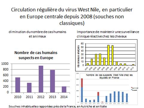 Circulation régulière du virus West Nile, en particulier en Europe