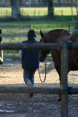 cheval en main