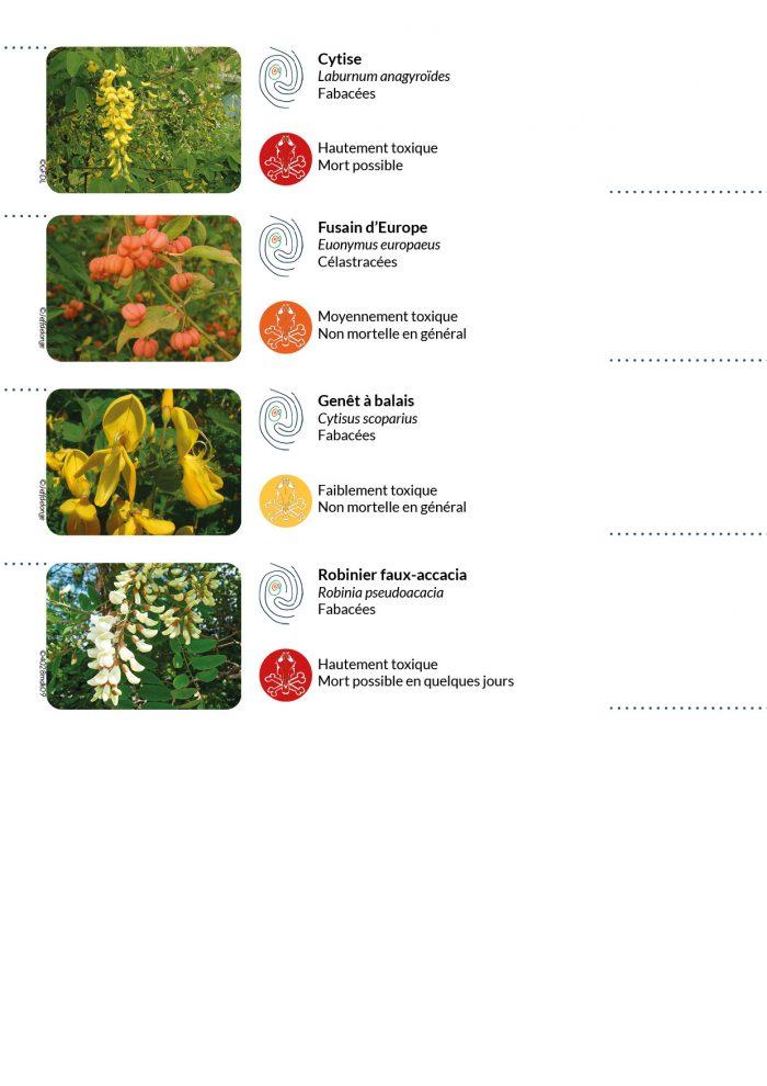 Haies bocagères: quelles sont les principales plantes toxiques pour les chevauxqu'il est possible d'y rencontrer?