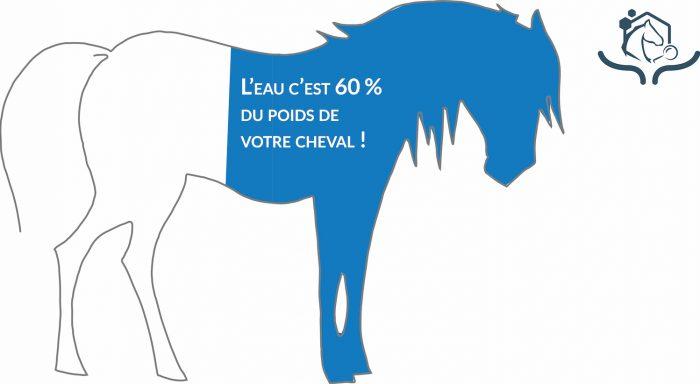 On estime que l'eau représente 60% du poids du cheval, ce qui représente autour de 480 litres pour un cheval de 800 kg !