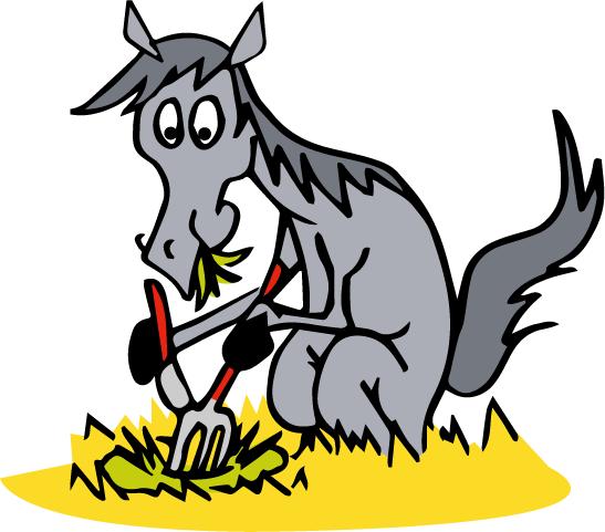 Le budget-temps du cheval correspond à la répartition sur 24h de ses activités : manger, se reposer, bouger, interagir avec ses congénères