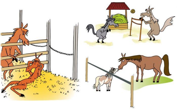 Le budget-temps du cheval correspond à la répartition sur 24h de ses activités : manger, se reposer, bouger, interagir avec ses congénères…