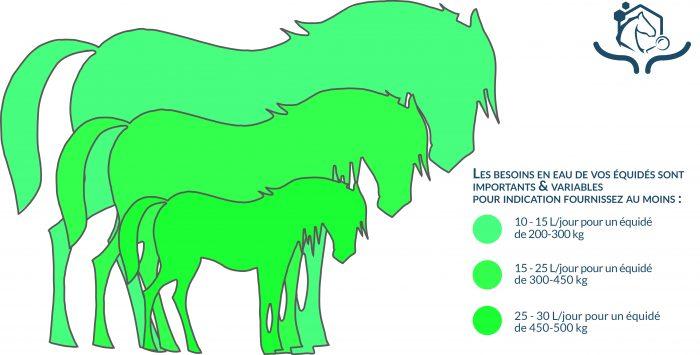 On estime en moyenne que les chevaux ont besoin de 5,2 litres d'eau/100 kg/jour. Ces besoins sont à doubler ou tripler pour les chevaux qui travaillent