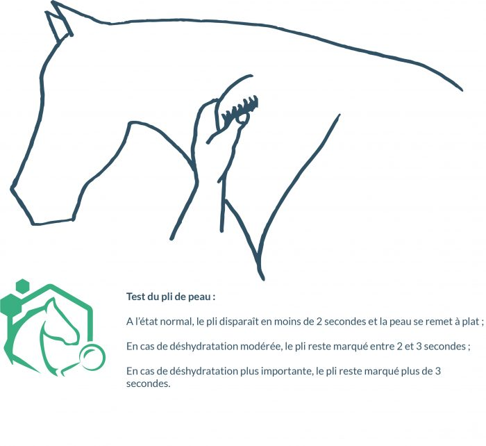 le pincement de la peau entre le pouce et l'index, au niveau de l'épaule en avant ou au milieu de l'encolure permet d'évaluer l'état de déshydratation du cheval par l'observation de la persistance du pli de peau après l'avoir pincée fortement