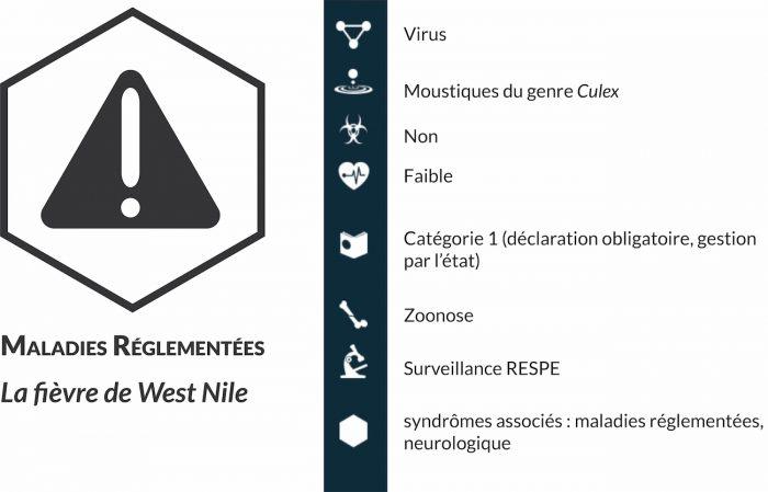 La fièvre de West-Nile (FWN) est une maladie virale qui affecte certains oiseaux et mammifères, dont les équidés et l'Homme. Elle peut passer inaperçue, mais peut aussi avoir une issue mortelle ou laisser des séquelles nerveuses après guérison.