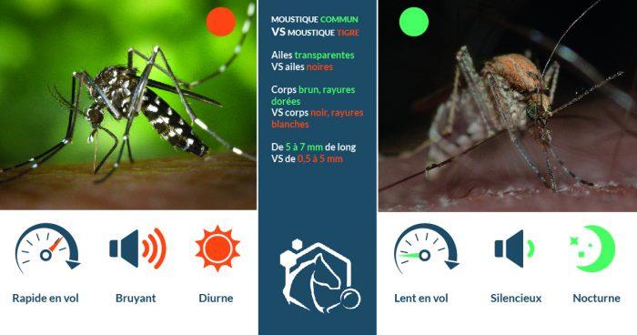 Le moustique tigre, Aedes Albopictus, et le moustique commun, Culex Pipiens, sont tous deux présents sur le territoire français.