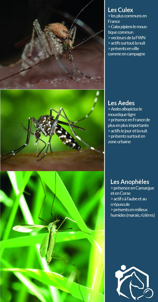 Il y a 65 espèces de moustiques en France, appartenant à 3 grandes familles : les Aedes (moustique tigre par exemple), les Culex et les Anophèles