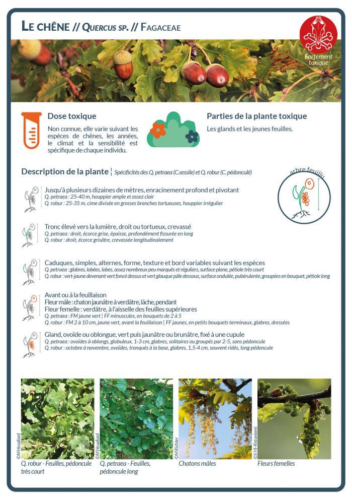 Le gland est une plante toxique, dont la toxicité varie en fonction des espèces de chênes, des années, du climat et de chaque individu