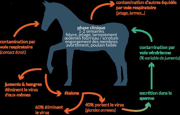 Le RESPE produit un rapport d'information périodique sur la reproduction équine, dans l'objectif de diffuser des informations concernant les maladies ou tout autre événement en lien avec la reproduction des équidés, pouvant avoir des répercussions sur la saison de monte.